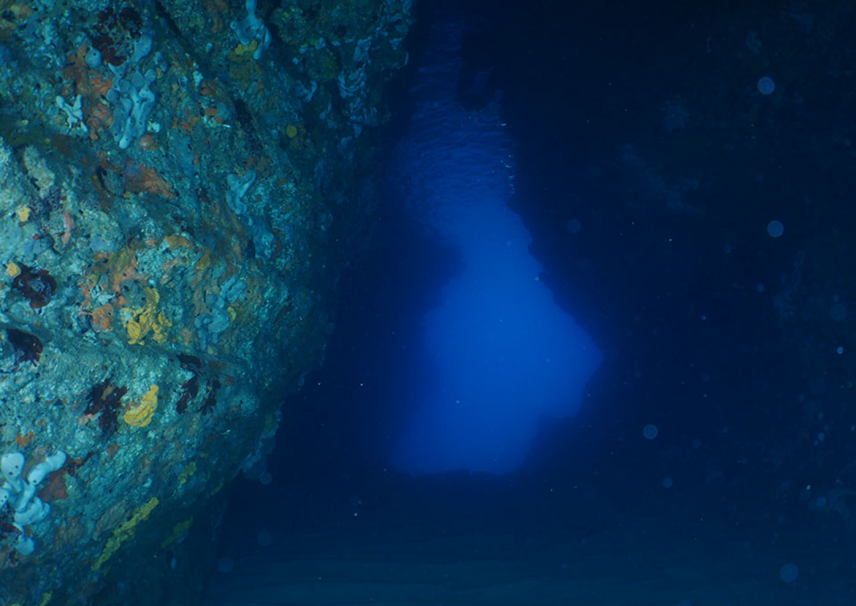 Montenegro reef diving